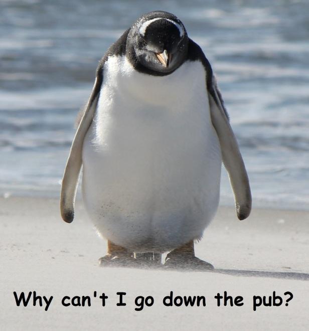 Penguin10